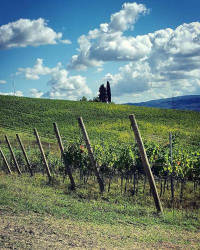 terre-d-aquesia-vini-italiani-vendita-online-02