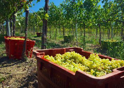 tenuta-vitivinicola-terre-d-aquesia-acquapendente
